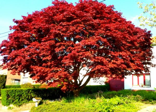 Bomen Voor In De Tuin.Het Is Maar Een Boom