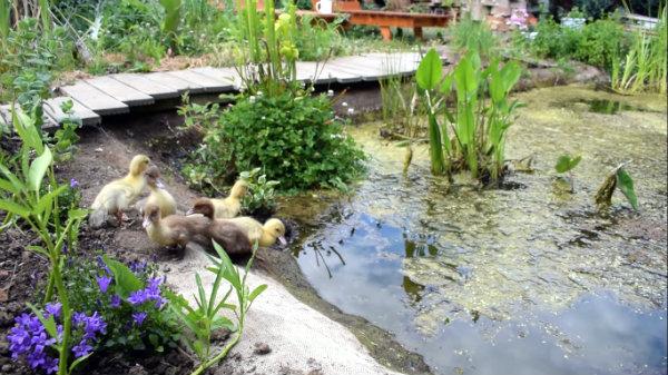 Pomp Water Tuin.Eetbare Eco Vijver Zonder Pomp
